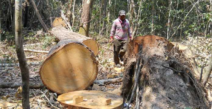 NEW FORESTRY LAW HAS HARSHER PENALTIES FOR ENCROACHMENTS AND ILLEGAL LOGGERS