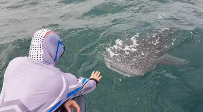WHALE SHARK ENCOUNTER AT SAM ROI YOT
