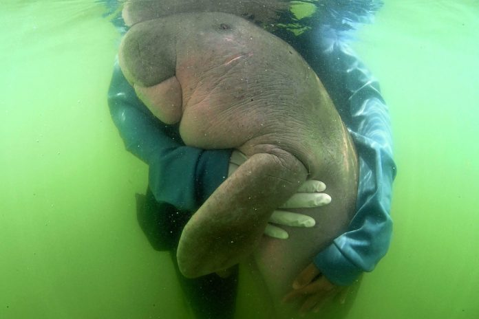 National Conservation Master Plan for Dugongs Proposed
