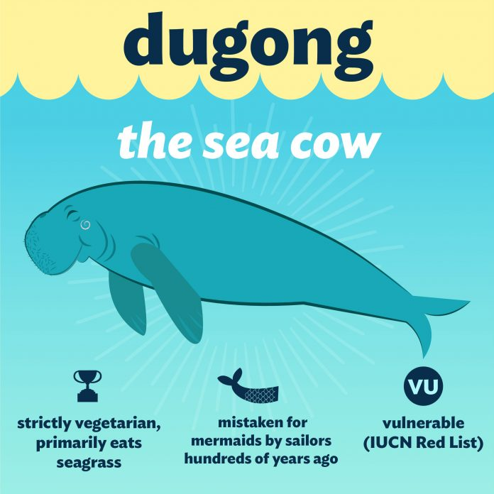 Dugong Conservation Plans After the Death of 'Marium'