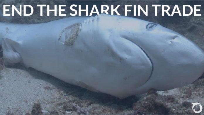 Sharks Under Siege