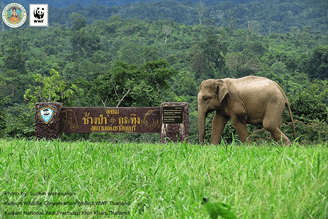 Kui Buri Wild Elephant Surveillance Centre Opened After Successful Trials