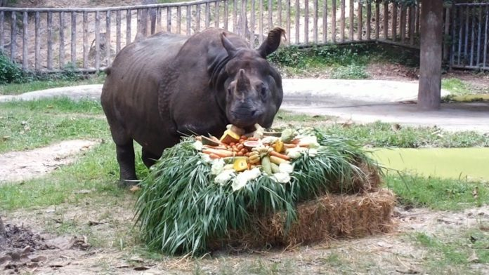 Chiang Mai Zoo Celebrates World Rhino Day
