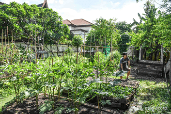 ROOFTOP  FARMING; GROWING FOOD IN A CRISIS - BUT WITH A LONG TERM FUTURE