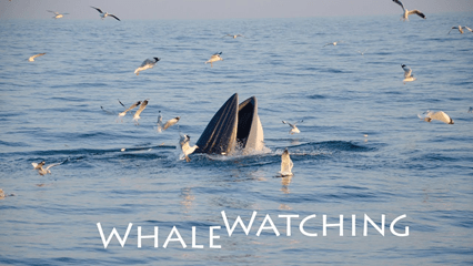 THREE DAYS TO WHALE WATCH AND EAT CRABS AT CHAO SAMRAN BEACH