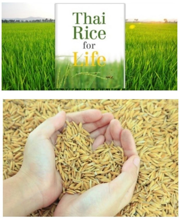 KOR KHOR 43 RICE PROMOTED FOR WEIGHT WATCHERS, DIABETIC PATIENTS