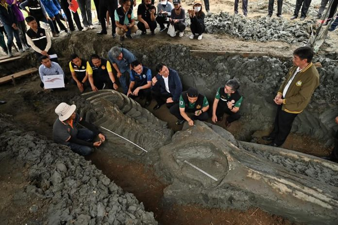 ANCIENT WHALE FIND 12 KILOMETRES INLAND
