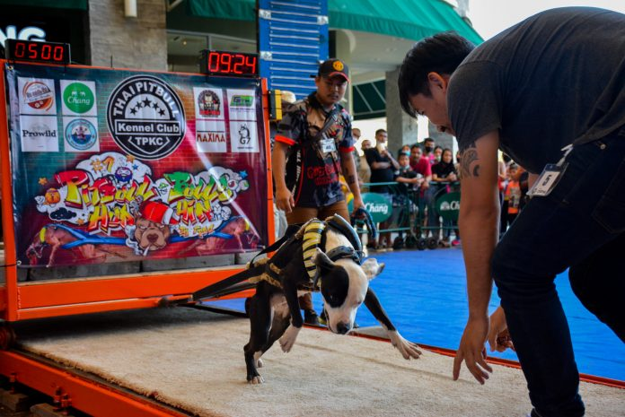 BULLY PULLING POWER FUELS CONTROVERSY AT THE 'PITBULLS & BULLIES' SHOW