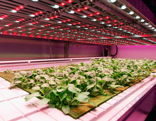 ADDING LED COLOUR FOR BETTER PLANT GROWTH