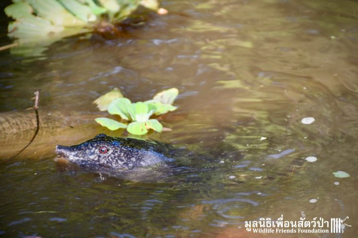 TAKING A TURTLE OFF THE MENU - A WFFT RESCUE