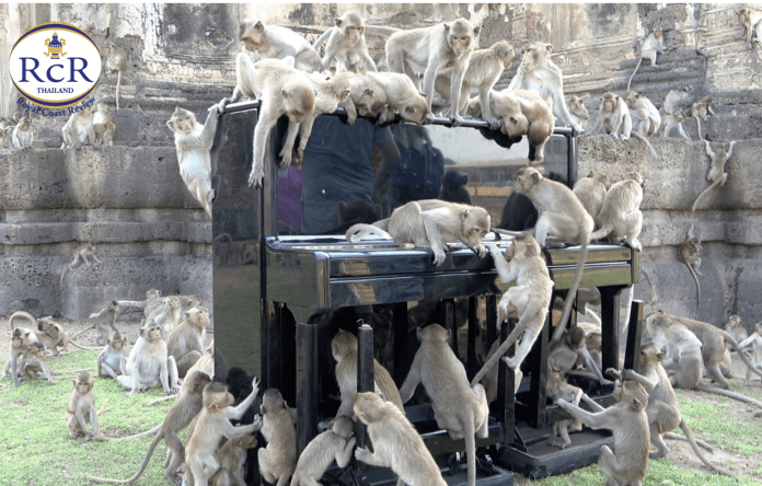 'MUSIC HATH CHARMS TO SOOTHE THE SAVAGE BEAST', INCLUDING ELEPHANTS & MONKEYS