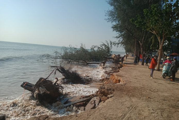 TREES LOST DURING SEVERE EROSION TO CHA-AM BEACH