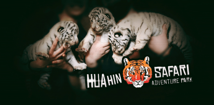 TIGER CUBS SEIZED FROM HUA HIN ZOO