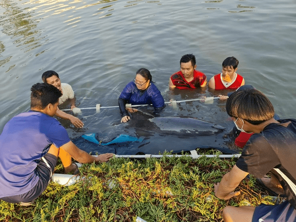 DISTRESSED DOLPHIN CANAL RESCUE AND RELEASE