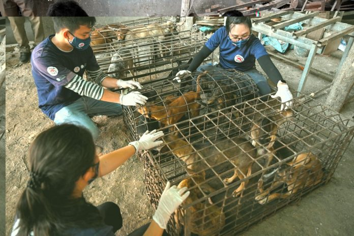 MAJOR DOG MEAT SOURCE IN CAMBODIA CLOSED
