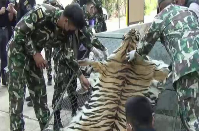 TIGER FARM CLOSURE WITH CHARGES OF WILDLIFE SMUGGLING