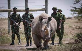 THE LINK BETWEEN ARMED CONFLICT AND CONSERVATION