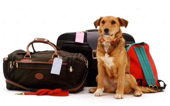 BRINGING PETS INTO THAILAND; WHAT YOU NEED TO KNOW