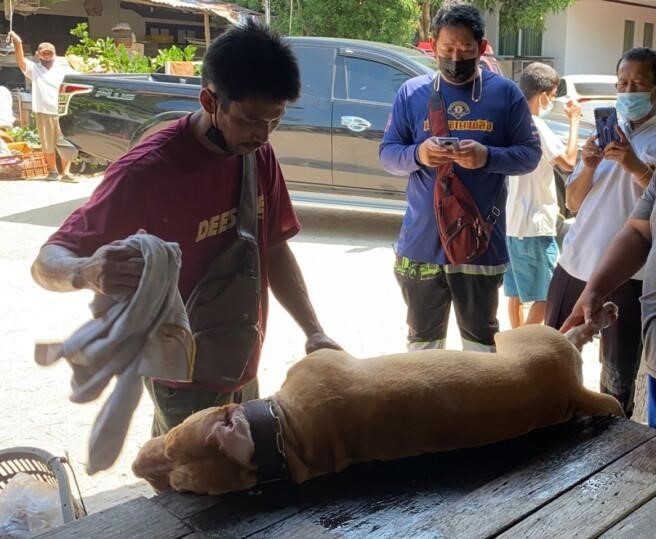 PATTAYA OWNER DIES AFTER PIT BULL ATTACK